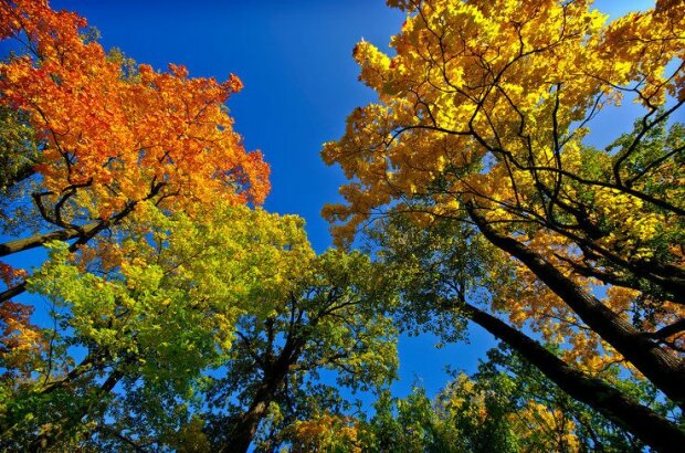 осень, погода,