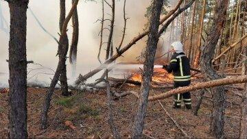 Пожежі на Луганщині виникли через умисні підпали