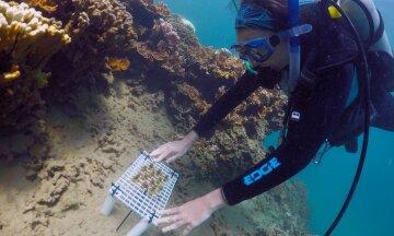 суперкоралл коралл