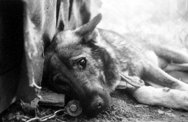 """В Днепре устроили охоту на собак, срочное предупреждение: """"доживают в муках"""""""