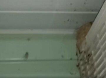 """Павуки """"взяли в облогу"""" український курорт слідом за медузами та комарами: кадри навали"""