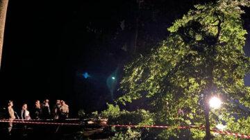 Негода забрала життя людей у Львові: дерево впало на молоду пару