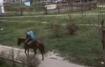"""Киян насмішив """"11-й пасажир"""" автобуса: проїхався верхи на коні, відео"""
