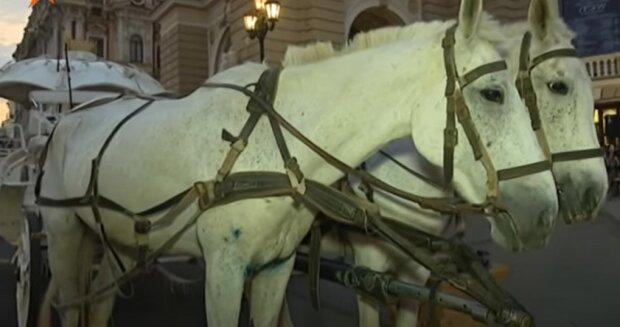 """""""Неприродні"""" коні в центрі Одеси розлютили зоозахисників: """"Заради розваг і прибутку"""""""