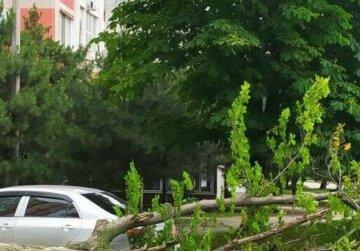 Стихія повалила дерева під Одесою: кадри наслідків шторму