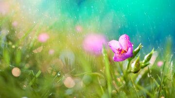 лето, цветы, дождь