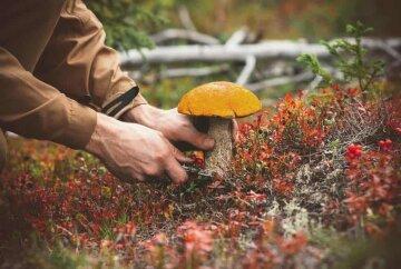 осень гриб