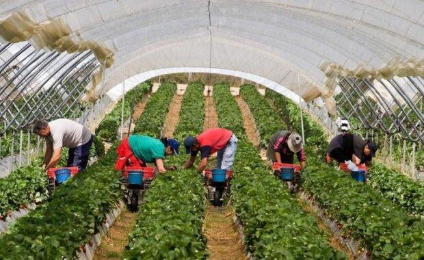 Новые штрафы для украинских работодателей: когда вступят в силу и кого коснутся