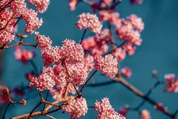 цветы, лето, весна, погода