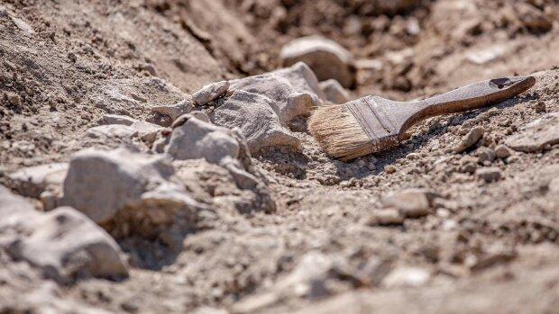 археолог, археология, находка