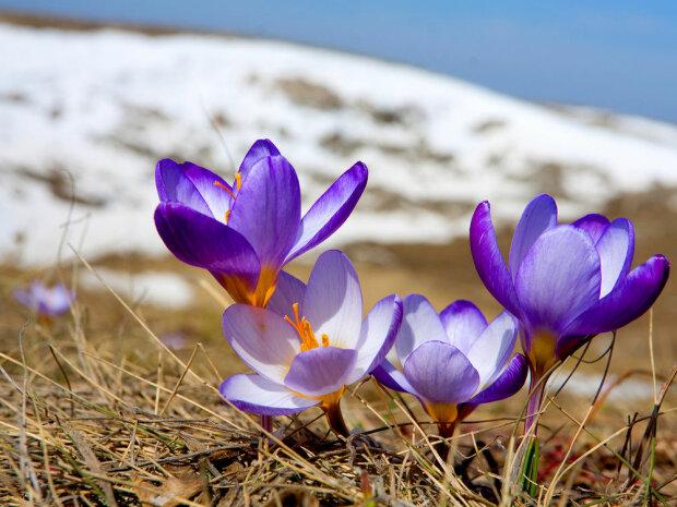 весна потепление оттепель цветы оттепель