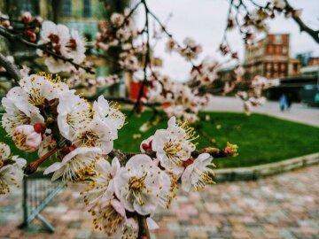 весна погода киев город