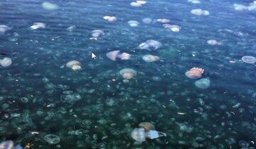 """""""За 10 лет такого не было"""": на видео показали, как гигантские медузы атаковали Одесский залив"""
