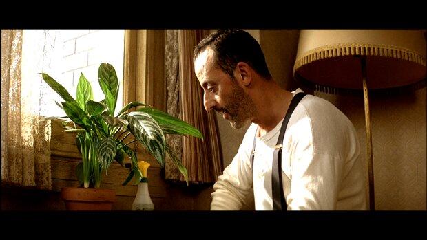 леон, фикус, растения