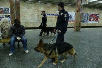 полиция с собаками
