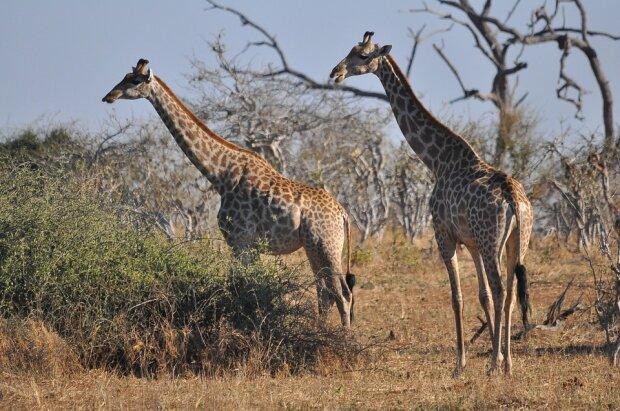 африка 1