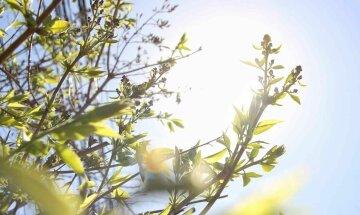 весна, лето, погода