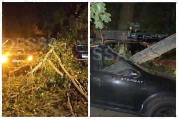 Огромное дерево рухнуло посреди двора в Одессе, много пострадавших: кадры ЧП