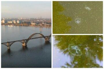 Днепр заполонили экзотические обитатели: нашествие медуз показали на видео