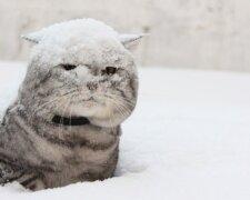 зима, кот