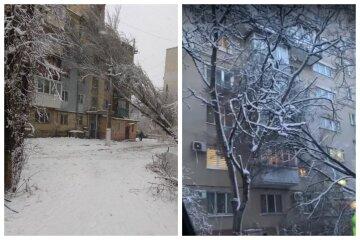 Заледенілі дерева падають на житлові будинки по всій Одесі: відео