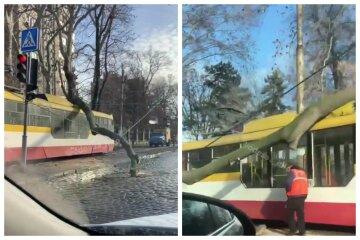 Стихія розбушувалася в Одесі, дерево звалилося прямо на трамвай з людьми: відео з місця НП