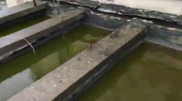 """""""Басейн на три доріжки"""": кияни зняли на відео наслідки аномальних дощів"""
