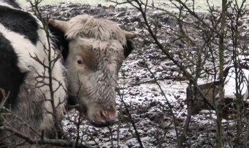 """Горе-фермер устроил концлагерь для животных на Львовщине, односельчане в ужасе: """"Зимой едят снег, а летом..."""""""