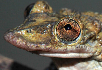 лягушка, жаба