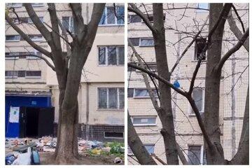 """""""Весеннее обострение"""": одессит выбрасывал из окна многоэтажки мебель, технику и другое, видео"""