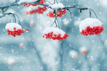 зима снег рябина