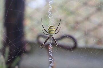 Рана стала фиолетовой: экзотический паук-оса ужалил ребенка под Сумами, детали