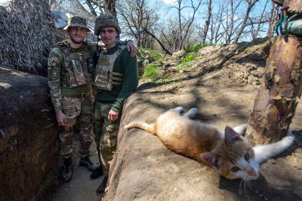 «Перемоги вам»: як вусаті побратими допомагають нести службу на передовій, фото бойових котиків