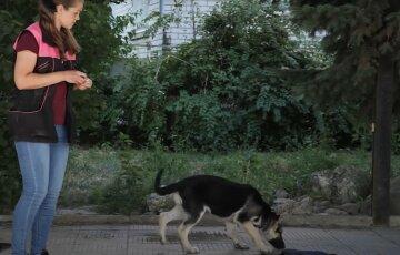 """Охота на собак началась в Киеве, фото: как выглядят опасные """"вкусности"""", которые разбрасывают по городу"""