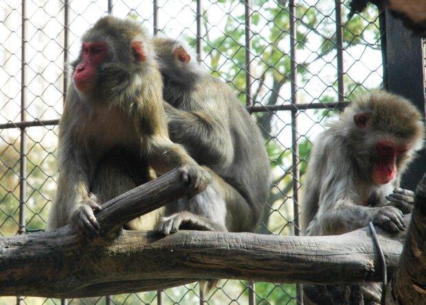 В Харькове на обезьян потратят сотни миллионов: на что уйдут деньги налогоплательщиков