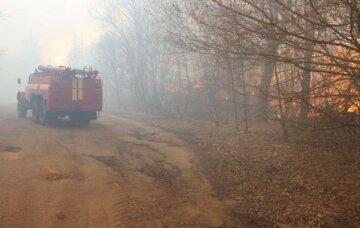 Экологи разработали новый план для борьбы с пожарами в Чернобыльской зоне
