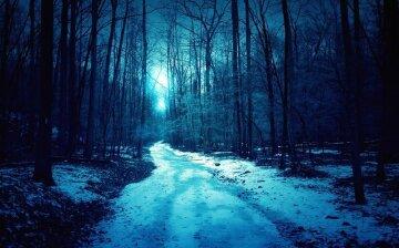холод-лес