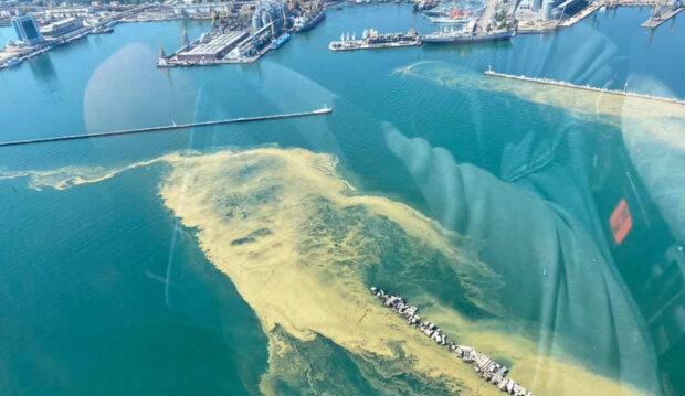 """Море в Одессе превратилась в """"кисель"""",  экологи бьют тревогу: """"купания в такой воде..."""""""