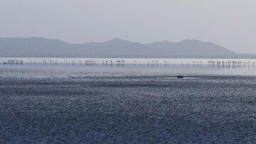Озеро, фламинго