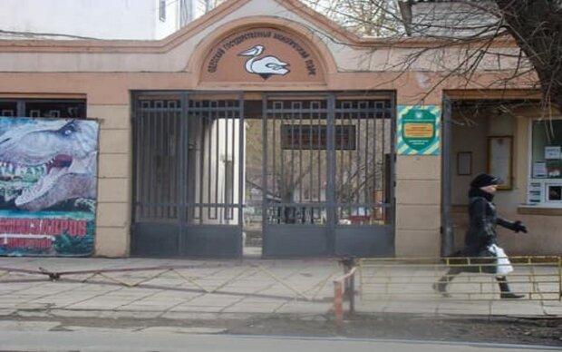 Переполох в зоопарку Одеси, втік знаменитий вихованець: відео з місця подій