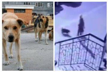 Зграя бездомних собак напала на маленьку дитину: кадри з камер спостереження в Одесі