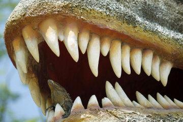 челюсть, зубы, пасть динозавра