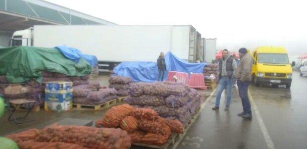 """Українцям пояснили, чому картопля їм вже не по кишені: """"Ціна буде рости"""""""
