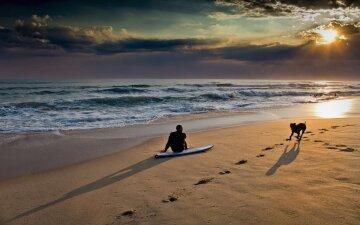 человек, собака, пляж