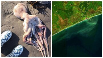"""""""Все мертве!"""": дайвер приголомшений побаченим на дні отруєного Тихого океану на Камчатці"""