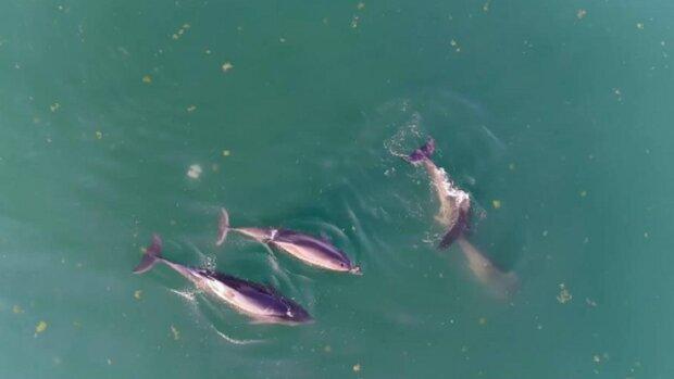 Стая дельфинов устроила грандиозный переполох в Одессе: зоозащитники поделились видео