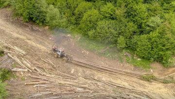 """Фото """"облысевших"""" Карпат показали украинцам: от заповедных лесов не остается даже пней"""