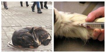 В Харькове планируют усыпить почти пять тысяч бездомных животных за 6 миллионов: детали решения