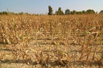 """Природа накоїла лиха на Одещині: """"Шкоди на мільярди"""", про що мова"""
