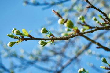 весна, погода